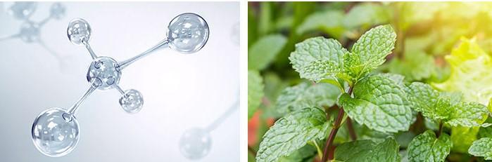 MISSHA-Fresh-Scalp-Therapy-Shampoo-d